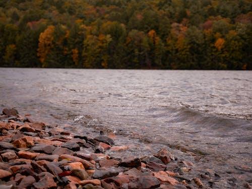 Ilmainen kuvapankkikuva tunnisteilla järvi, puut, Syksy