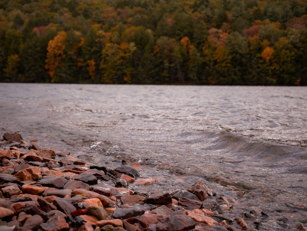 autumn, lake, trees