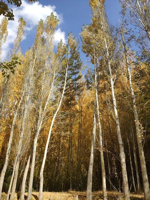 Ảnh lưu trữ miễn phí về cây ngã, ngã, rơi lá, Rơi màu