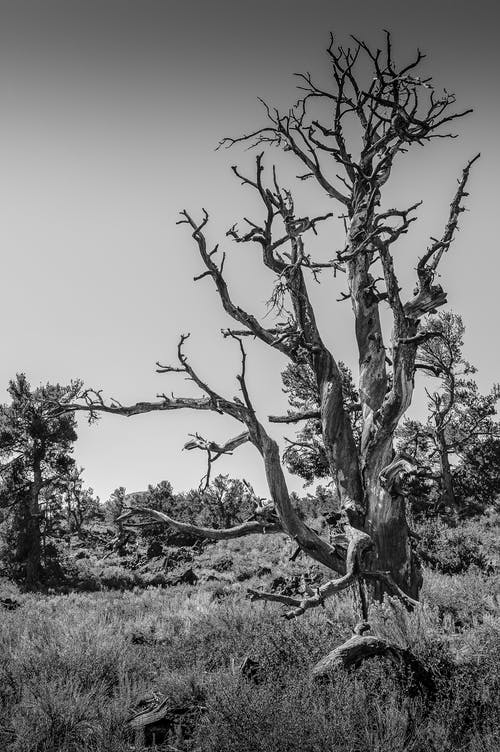 Monochrome Photo of Bare Tree