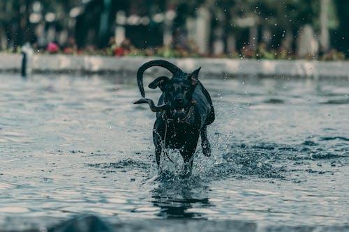 Darmowe zdjęcie z galerii z czarny pies, pies, psi, szczeniak