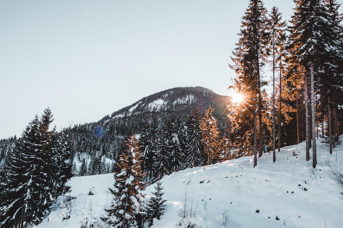 alto, árvores, aventura