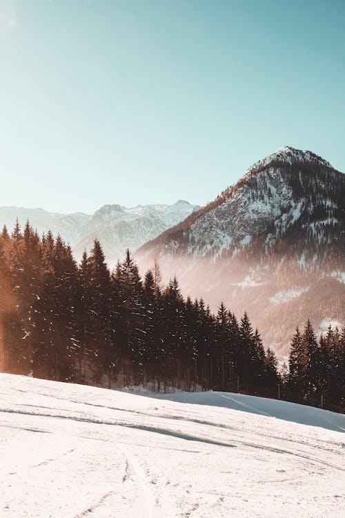 Ảnh lưu trữ miễn phí về cảnh núi non, mùa đông, nhụy hoa
