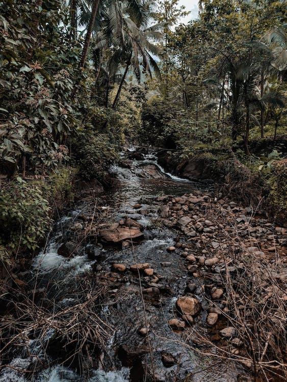air, alam, aliran