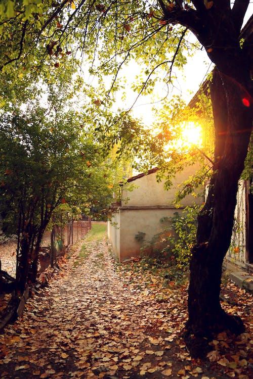 Бесплатное стоковое фото с желтый свет, осенние цвета, природный