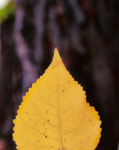 Бесплатное стоковое фото с Adobe Photoshop, осенние цвета, осень, художественная фотография