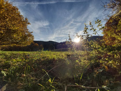 日落, 樹葉, 秋天, 秋天心情森林 的 免费素材照片