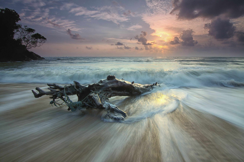 ağaç gövdesi, bulutlar, dalga, dalgalar içeren Ücretsiz stok fotoğraf