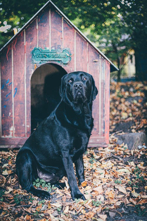 Photo Of Dog Sitting Near Dog House