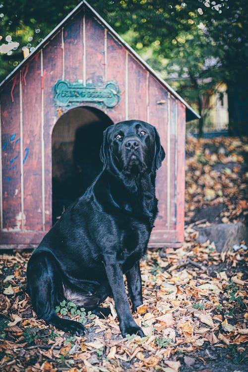 Photo Of Dog Sitting Near Dog House