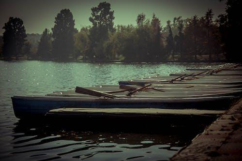 Gratis arkivbilde med båter, innsjø, park, rad