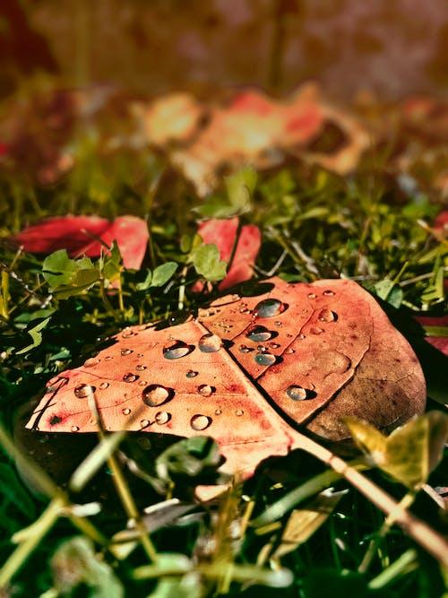 Imagine de stoc gratuită din anotimp, cădere, frunză, iarbă