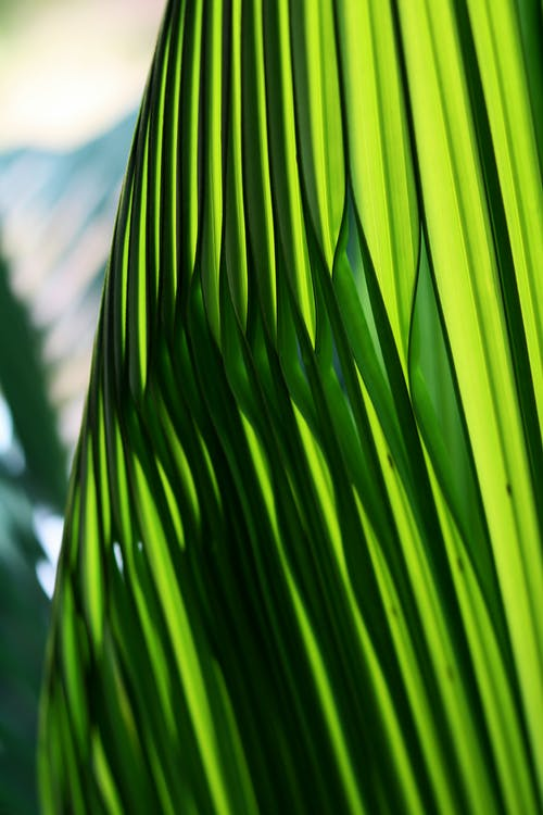 Macro Photography of Green Palm Leaf