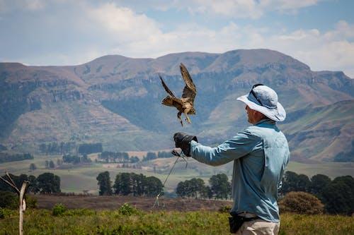 Man Standing Beside Flying Bird