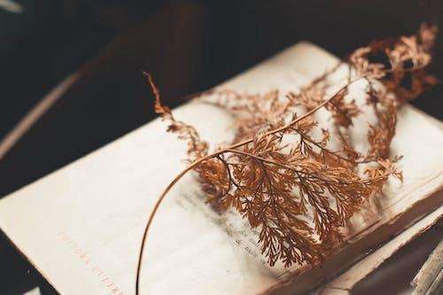 Бесплатное стоковое фото с завод, книга, сухой, сухой лист