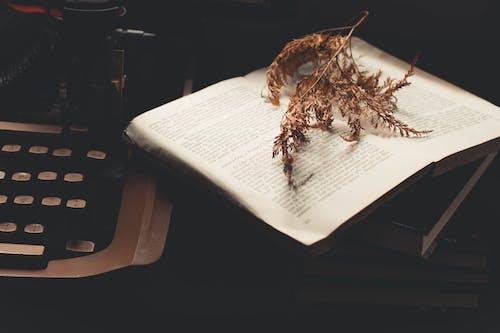 Бесплатное стоковое фото с завод, книга, страницы, сухой лист
