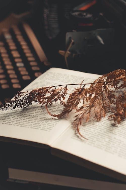 Foto profissional grátis de folha, livro, páginas