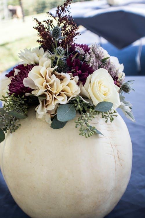 Ảnh lưu trữ miễn phí về hoa, lễ cưới, quả bí ngô, trung tâm