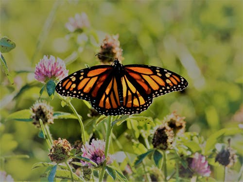 Free stock photo of autumn mood, fall colors, monarch butterfly