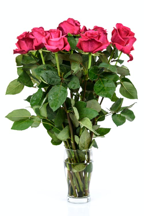 Free stock photo of anniversary, arrangement, beautiful, beauty