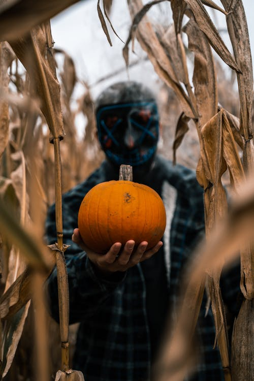 Person Wearing Mask Holding Orange Pumpkin
