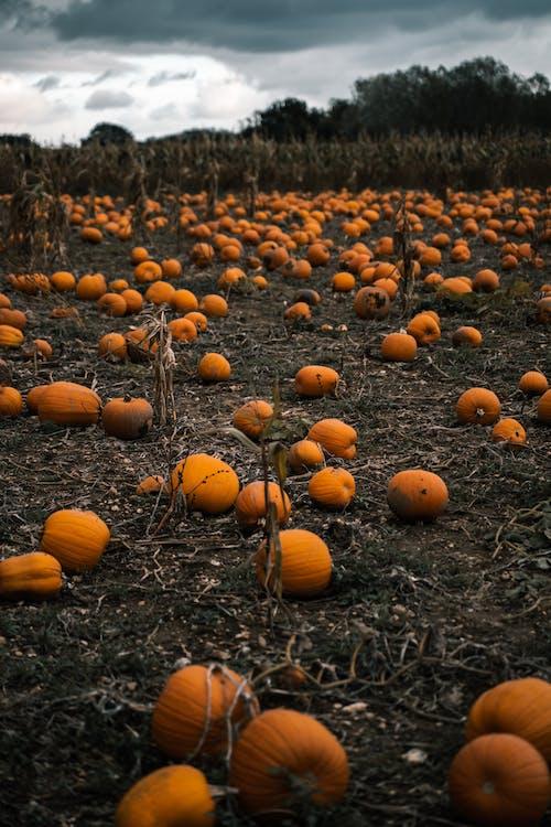 Photo Of Pumpkin On Ground
