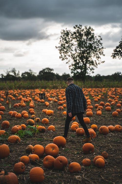 Безкоштовне стокове фото на тему «Англія, апельсин, Велика Британія, вирощувати»