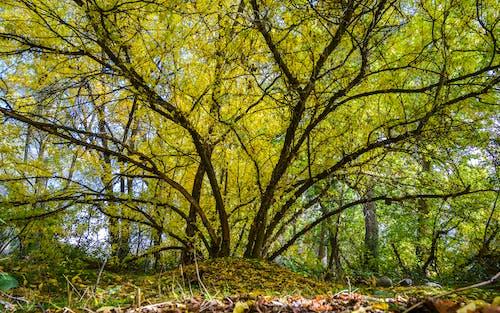 Imagine de stoc gratuită din arbore, culori de toamnă
