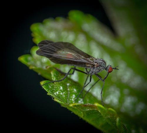 Fotobanka sbezplatnými fotkami na tému hmyz, lietať, makro