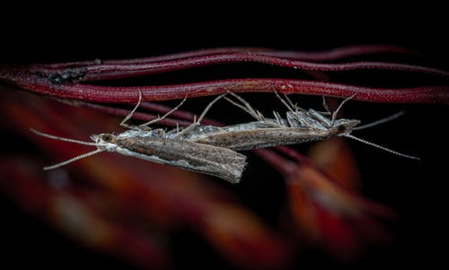 Fotobanka sbezplatnými fotkami na tému hmyz, makro, mora