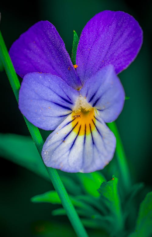 Fotobanka sbezplatnými fotkami na tému kvet, makro