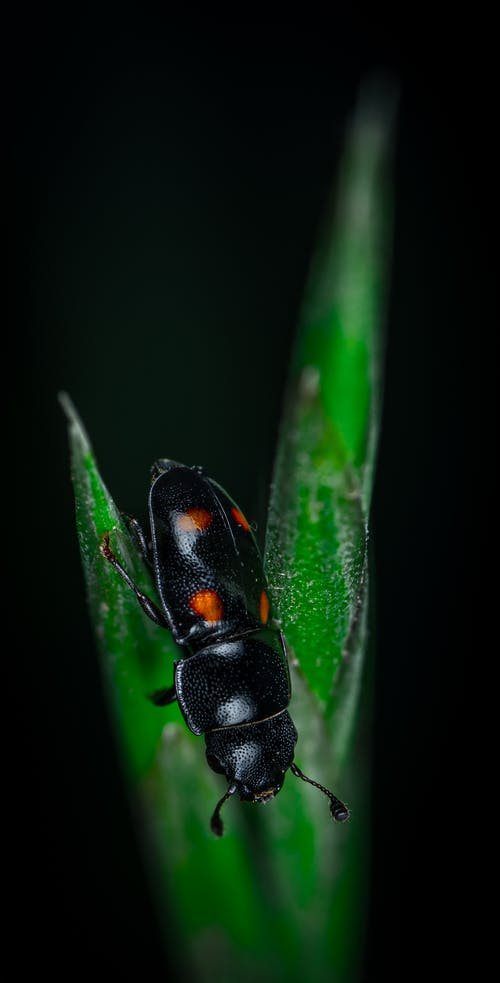 Fotobanka sbezplatnými fotkami na tému chrobák, hmyz, makro