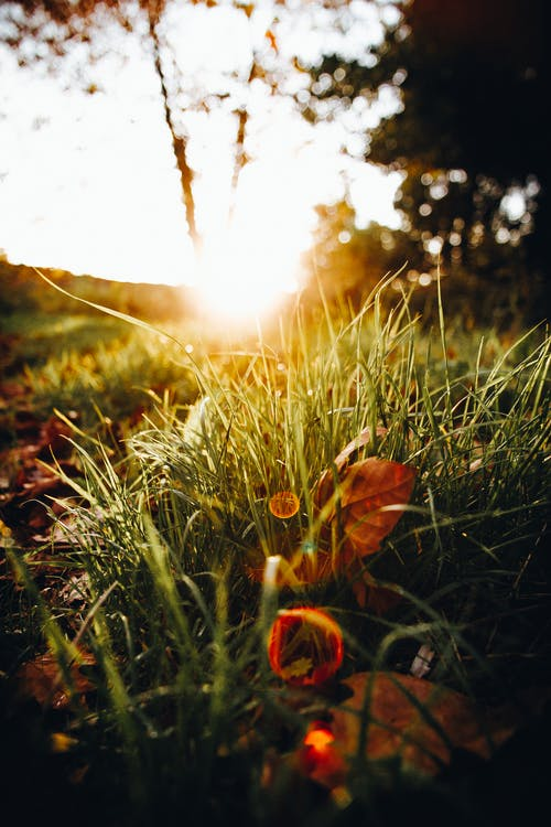 Close-Up Photo of Grass During Golden Hour