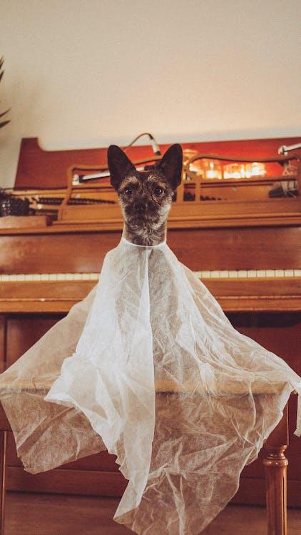 Fotobanka sbezplatnými fotkami na tému duch, Halloween, halloween šteňa