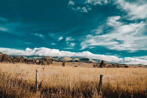 Fotobanka sbezplatnými fotkami na tému dedinský, farma, gazdovstvo, hospodárstvo