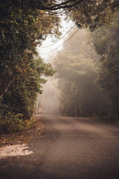 Δωρεάν στοκ φωτογραφιών με αδειάζω, δέντρα, δρόμος, ζοφερός