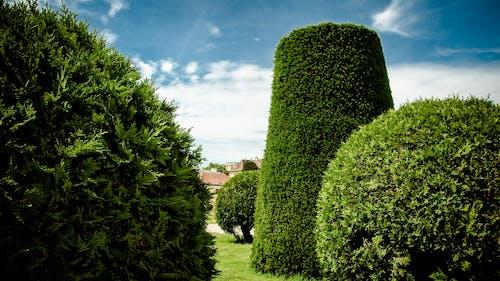 Základová fotografie zdarma na téma park, příroda, rostliny, vídeň