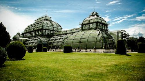 Základová fotografie zdarma na téma architektura, budova, palmový dům, park