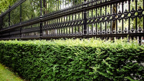 Základová fotografie zdarma na téma park, plot, rostliny, tráva