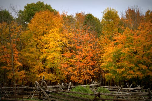Free stock photo of autumn color, autumn mood, autumn mood forest