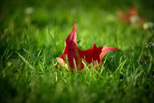 Free stock photo of autumn mood, fall foliage, fallen leaves