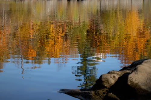 Free stock photo of autumn colors, autumn mood, autumn reflection