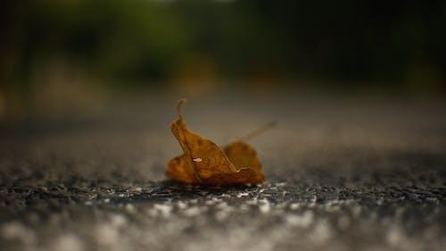 Free stock photo of art, autumn, blur, close- up
