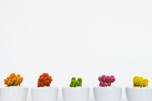 Five Assorted-color Cacti