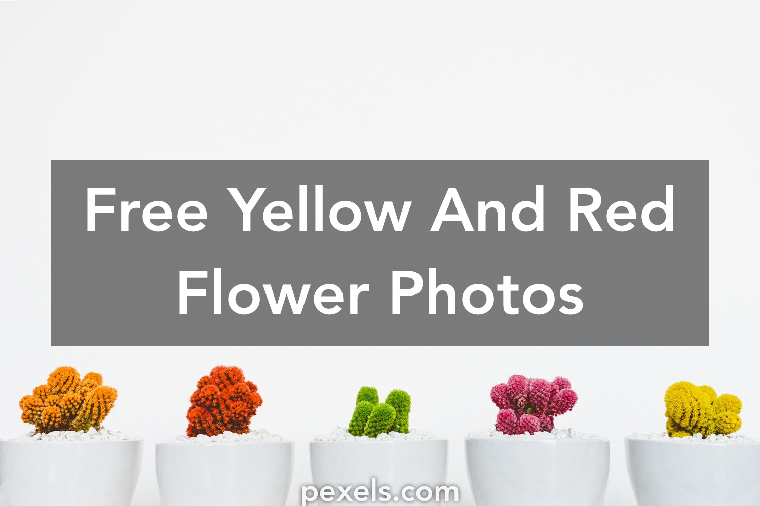 1000 Great Yellow And Red Flower Photos Pexels Free Stock Photos