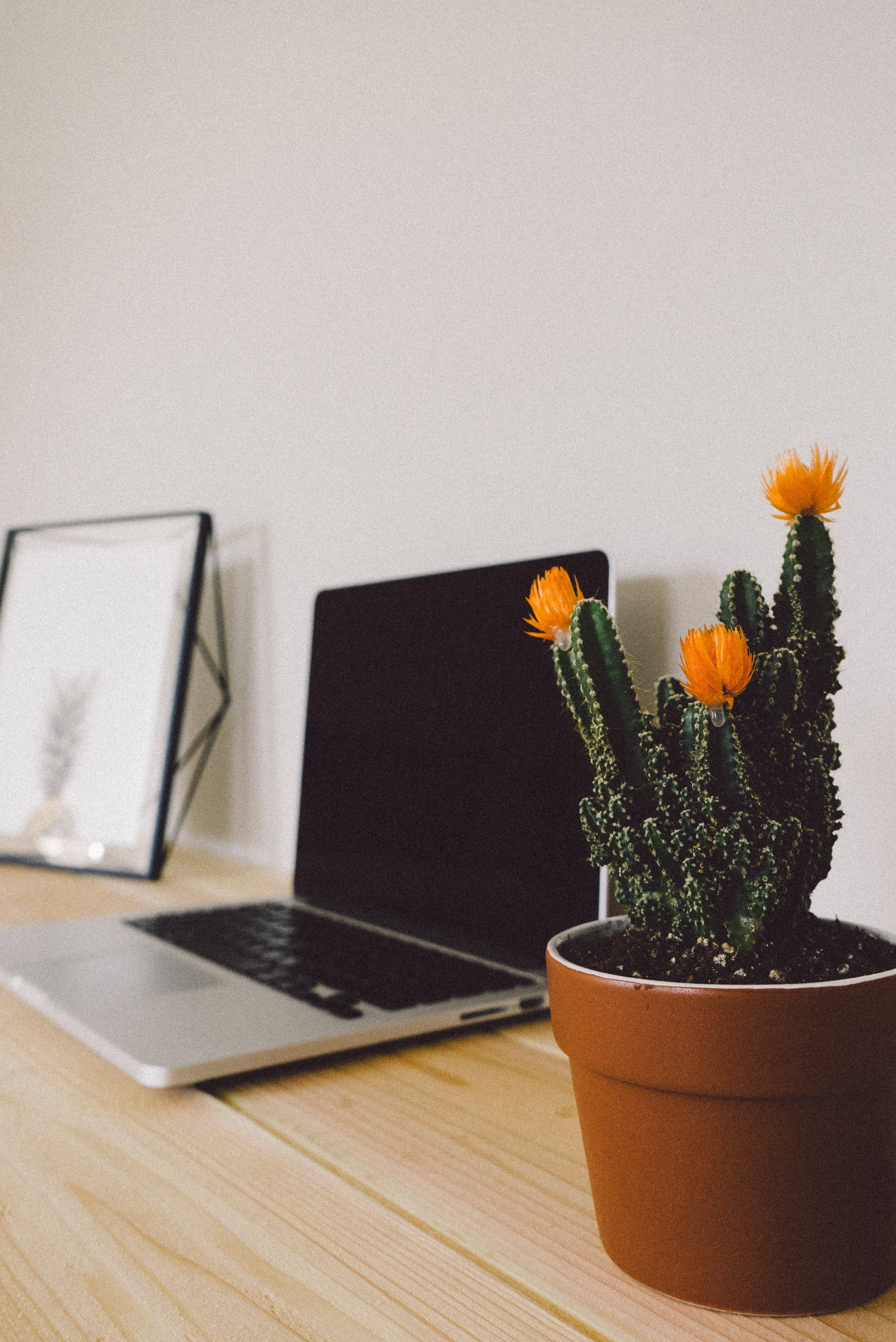 Turned-off Macbook Pro Beside Potted Green Cactus