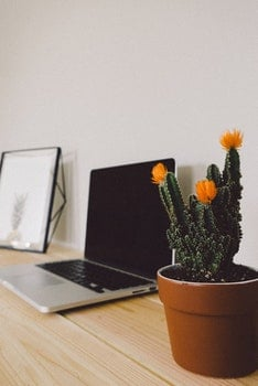 Free stock photo of wood, flowers, desk, laptop