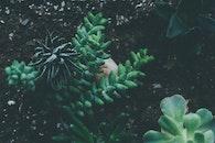 nature, earth, garden