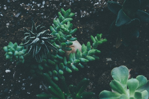 Free stock photo of nature, earth, garden, leaf