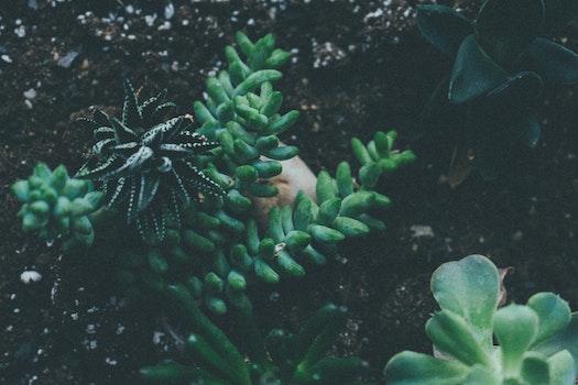 Kostenloses Stock Foto zu natur, erde, garten, blatt